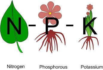 Nitrogen - Phosphorus - Potassium
